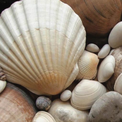 Fodder Seashells