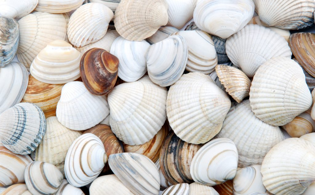 Seashells in bulk and retail by Morgan Agro