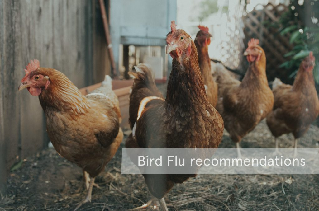 Bird flu recommendations
